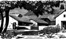 wood-engraving original print: Farmyard for Farmer's Glory